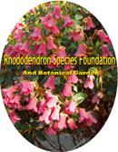 Rhododendron Species Foundation